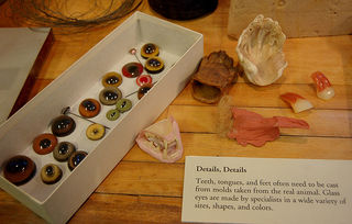 Eyes and other taxidermy accessorites via CE
