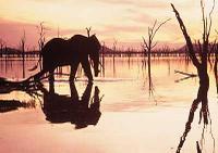 Kariba_elephant