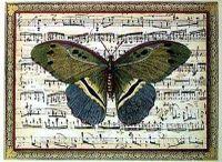 Butterfly_harmony_ii