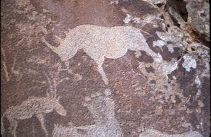 Petroglyph_rhino_twyfelfontein