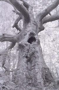 Tom_z_tree