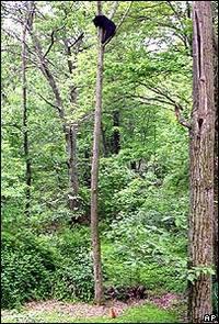 Ap_jack_the_cat_trees_bear