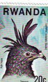 Crested_eagle