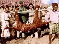 Extinct_bali_tiger_1