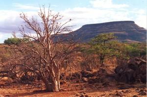 Herero_seseme_bush_grootberg_namibia