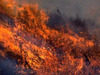 Wildfire_photo_from_ucanr